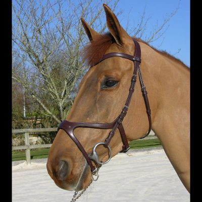 Therapeutic Bridles